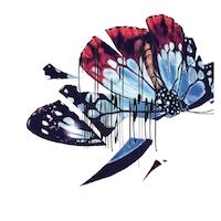 Swallowtail reflect